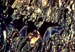Bat concerns: The death of a Minnesota man from rabies this fall raises new concerns over the interactions between humans and bats.
