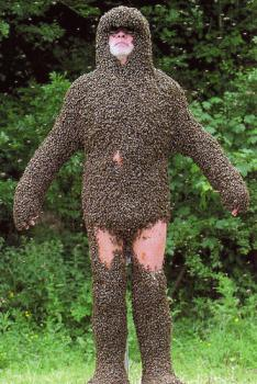 Bees attempt to asphyxia-ball a man: Little do they know that he breathes through his thighs.  (image courtesy of Max xx on flickr.com)