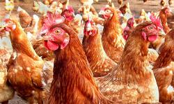 Bird flu death in China