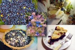 Blueberries and metamorphism: The real attraction at the Magnetic Rock Trail?