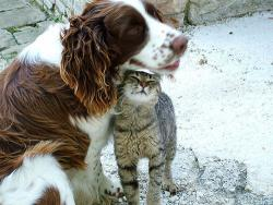 Cats and dogs, living together: You need more proof?