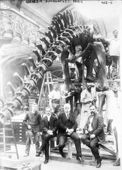 A dinosaur for Paris: Arthur Coggeshall (sitting at left with legs crossed) poses with workers and William Holland (on Coggeshall's immediate left) at the Paris museum during the mounting of the cast of Dipolodocus carnegii, c. 1908.