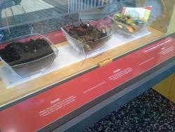 Compost for you: Moving from right to left, you can see how microbes deconstruct organic garbage into compost.