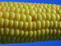 Corn, the real enemy: The demand for corn to make ethanol is pushing up the price of many food items, including ice cream. Photo by frascelly at flickr.com