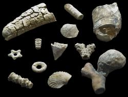 Typical Paleozoic fossils from Minnesota: This year's National Fossil Day theme is Paleozoic fossils. Minnesota Paleozoic rocks hold an abundance of such fossils dating from the Late Cambrian though the Late Ordovician Periods.