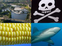The deadly cycle: Farming > River > Dead Zone > SHARKS!