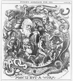 Evolution timeline from 1882: This caricature of Darwin's theory appeared in the 1882 Punch Almanac. The recent evolution timeline created by Kyrk and Sezen is a bit of an improvement.