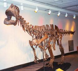 Dinosaurs are lurking everywhere: This photo of a Chinese dinosaur was taken over two years ago at The Pink Palace Museum in Memphis, Tennessee. It was the last roll of 35mm film I ever shot.  I only had it developed this week.