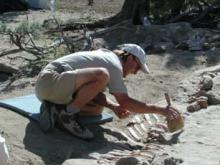 Digging dinosaurs in Utah: Courtesy Bureau of Land Management