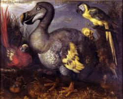 Edwards' Dodo: painted by Roelant Savery in 1626