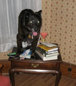 A day in the life: That the dog is on the table isn't strange—I put it there—but what it had to say was extremely odd.