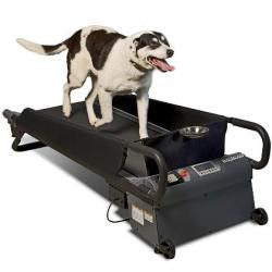 All that's missing are trees and fire hydrants: Doggie treadmills are catching on as an alternative to daily walks on city sidewalks.