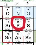 the element phosphorus among its neighbors in the Periodic Table of the Elements