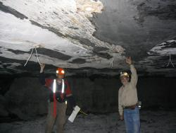 Fallen fossil tree in coal mine: Howard Falcon-Lang (University of Bristol) and John Nelson (Illinois State Geological Survey) mark off the width of a large fossil tree trunk lying just above the contact of the coal bed.