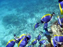Who will be next to go?: The greatest loss of marine diversity is due not to habitat destruction, but clerical error.