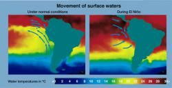 In hot water: These thermal imaging maps show the difference between normal surface water temperatures and El Nino surface water temperatures in the Pacific Ocean. (Photo from the National Oceanic and Atmospheric Administraion Photo Library)