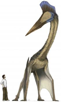 Hatzegopteryx: Keeping it real. Unfortunately, there were no people around when the azhdarchids were flying, but we provide good scale.