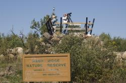 The hawk count has officially begun: Spotters at Hawk Ridge Nature Reserve tally the hawks, eagles, and other birds migrating south for the winter.