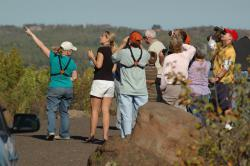 Hawk Ridge birdwatchers: Approaching raptors catch the crowd's attention. Photo by Mark Ryan.