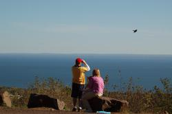 Kestrel in flight: Lake Superior serves as the backdrop as observers follow a kestrel in flight across the ridge. Photo by Mark Ryan.