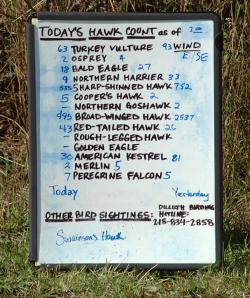 Hawk Ridge tote board: The migrating birds are tallied and the count is updated throughout the day. Photo by Mark Ryan.