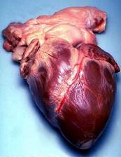 Working better and better: Statistically, our hearts are getting better and better. The rate of heart-related deaths is dropping faster than goals set by by national health organizations.