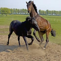 A couple horses: just horsing around