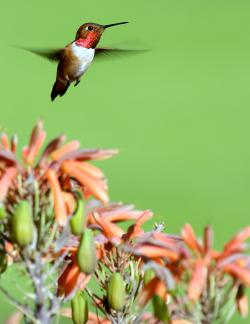 Hummingbird in quieter, slower times