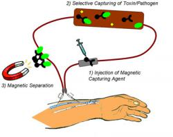 Nanomagnets remove toxins from blood: This photo should help.