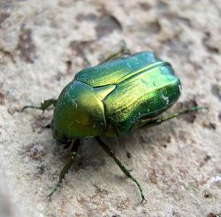 Jewel  bug colors