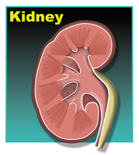 You weren't using that kidney right?