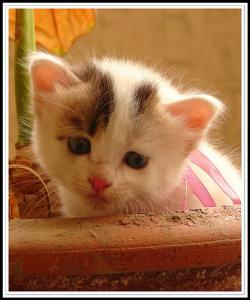 OMG! Cute kitten! LOL!: I r poisnin ur brain!