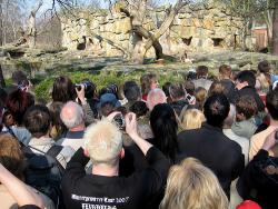 Crowds gather at the Berlin Zoo to see the polar bear cub Knut: Photo by Claudius Prosser at flicker.com