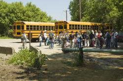 School kids and buses swarm the Lilydale parking lot: Fossil-hunting in the quarries is a favorite extracurricular activity.
