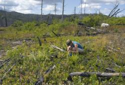 Blueberry picking: Mrs. R collects blueberries near the Magnetic Rock Trail.