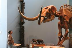 Man vs. mammoth: Is a face-off like this in our future...again?