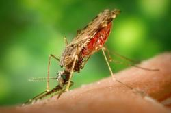 Mosquito proofing: New chemical compounds could block human smells that mosquitoes use to find their prey.