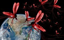 OMG! Can nothing stop them?: According to a new study, mosquitoes, those buzzing, biting, itch-producing flying pests that make life miserable for many of Earth's inhabitants (mainly we humans), can easily adapt to Deet, one of the commonly used ingredients in insect repellents.