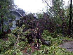 Storm-damaged house and trees in South Minneapolis: Northwest corner of Portland Avenue South and East 43rd Street in Minneapolis.