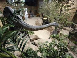 Creating controversy?: This week's opening of a new museum near Cincinnati has generated new discussions on the origins of the world. Visitors at the museum are first greeted by this giant sauropod dinosaur. (Photo from Creation Museum)