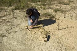 Down and dirty: Pat Ryan digs out a cephalopod fossils found on the flats of a Decorah shale exposure near Cannon Falls, MN.