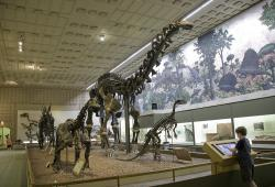 """Thunder Lizard"" at the Peabody Museum: ""Brontosaurus excelsus"" (Apatosaurus excelsus) stands above other denizens discovered at Wyoming's Como Bluff. After its discovery its original name was determined to be scientifically invalid, it remains part of the Yale dinosaur's official record."