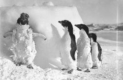 Dude, what's the wind chill?: The first wind chill calculations were made in Antarctica, but not by penguins.