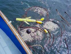 "Found!: ""Phoebe"" was found tangled in kelp and crab lines off the Washington coast."