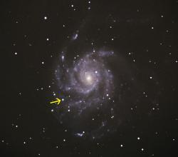 Supernova in the Pinwheel Galaxy