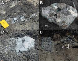 Plastiglomerates: Characteristics of the two types of plastiglomerate. (A) In situ plastiglomerate wherein molten plastic is adhered to the surface of a basalt flow. Field book is 18 cm long. (B) Clastic plastiglomerate containing molten plastic and basalt and coral fragments. (C) Plastic amygdales in a basalt flow. (D) Large in situ plastiglomerate fragment. Adhered molten plastic was found 15 cm below the surface. Note the protected vegetated location.