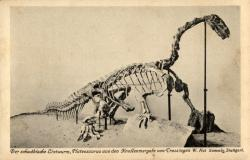Plateosaurus mount: Early postcard of a Plateosaurus skeleton seen in a museum in Stuttgart, Germany.