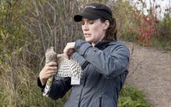 Snared and tagged raptor: Hawk Ridge volunteer Jessica displays the wing of a sharp-shinned hawk.