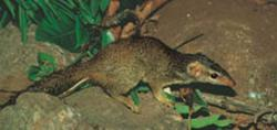 "Bud-weis-er: Tree shrews of Malayia have been found to go on two-hour benders each night, drinking ""palm beer"" from the fermented nectar of palm trees in the rain forests. And they don't even have a hangover the next morning."