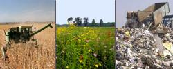 Crop waste, plants grown on abandoned land, and trash, are all possible sources of biofuels.